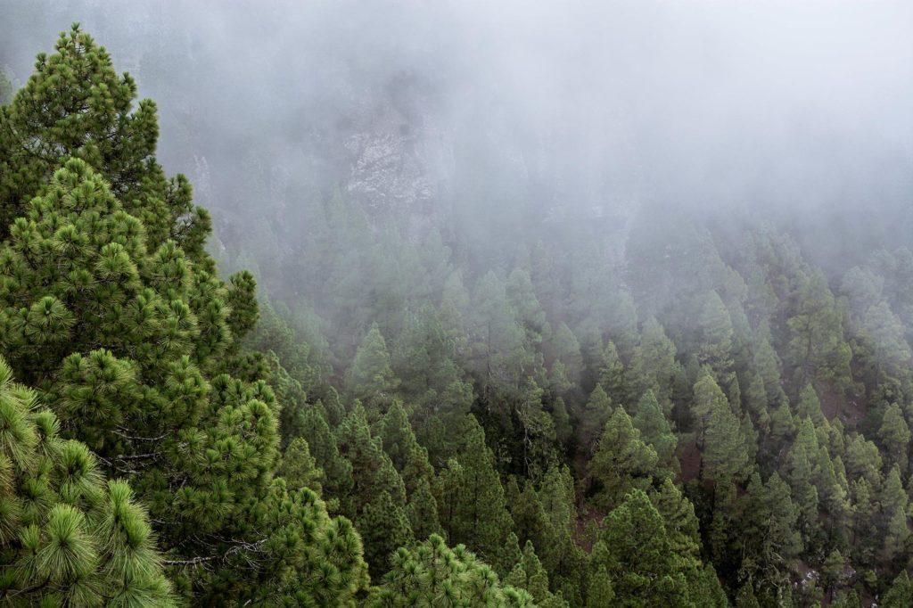 Niebla en Tamadaba